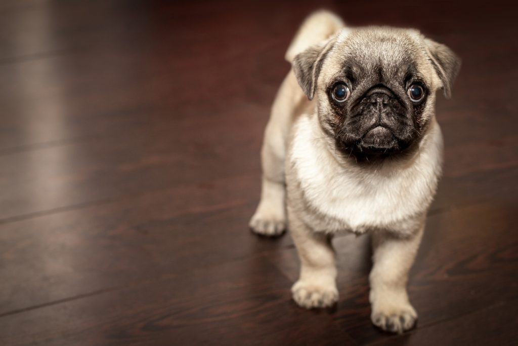 These Are the Dog Etiquette Rules to Follow When Buying or Selling a Home